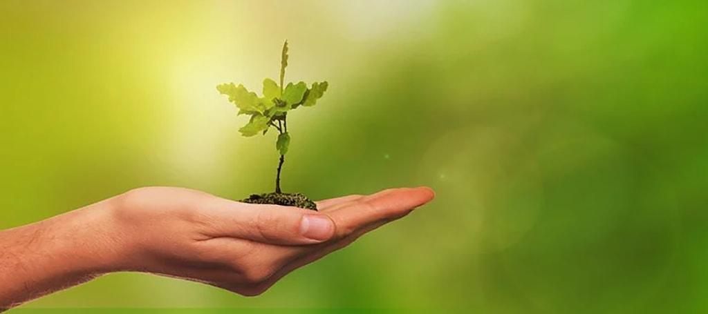 Kädessä pieni puuntaimi. Nuorten tilanne on kasvua taimesta isoksi.