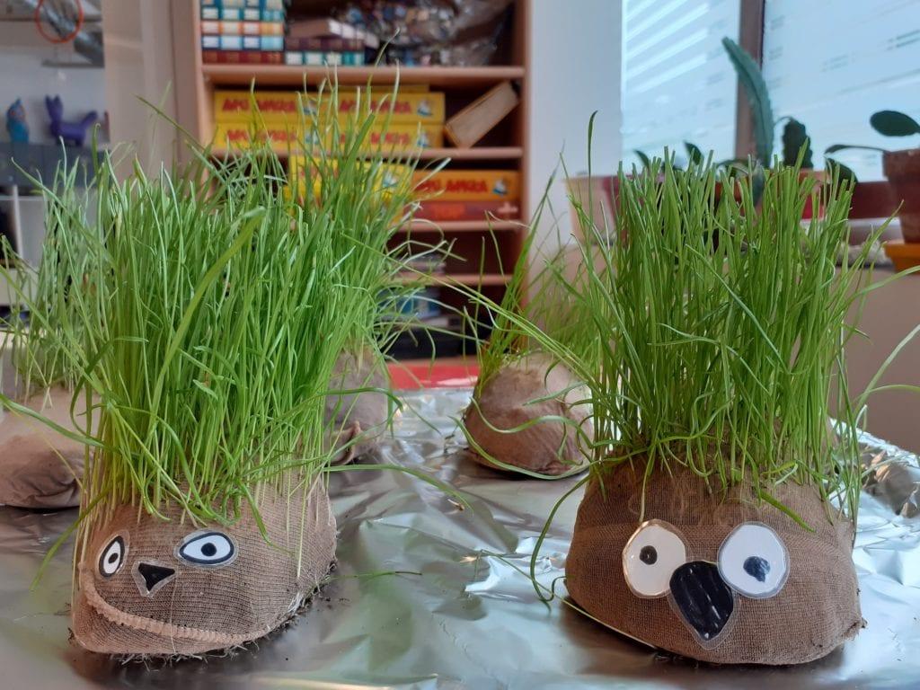 Rairuohoa kasvamassa sukkahousuista tehtyihin astioihin. Istutus näyttää ihan siililtä.